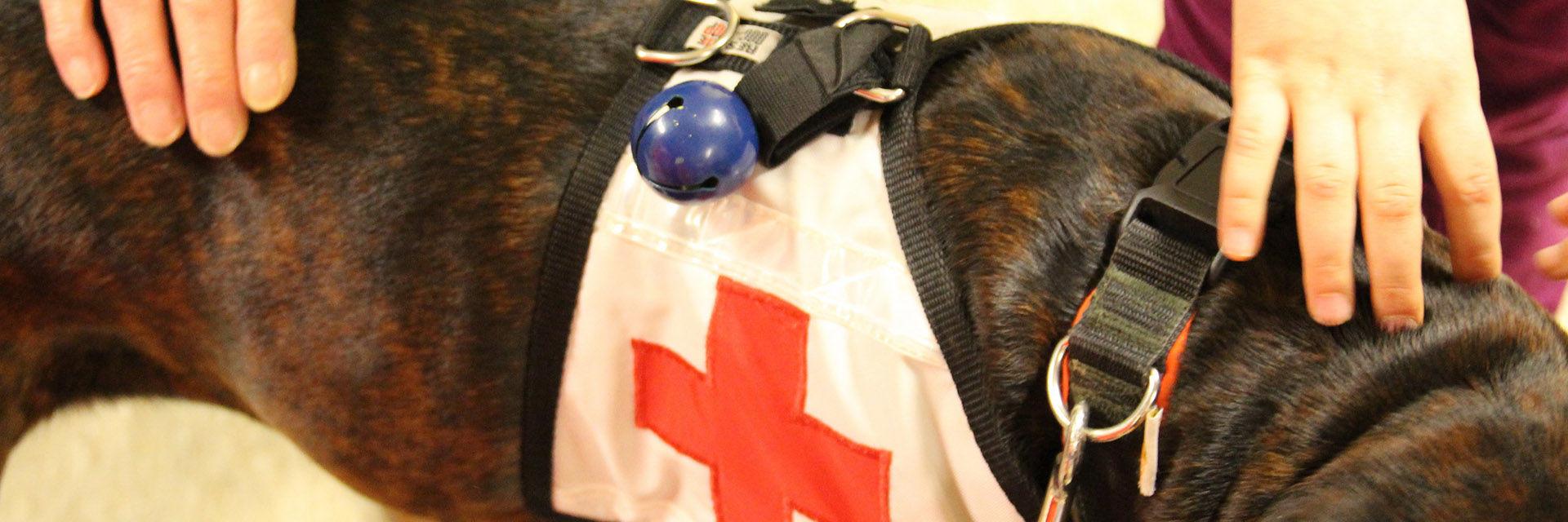 Faszination Rettungshund - DRK KV Euskirchen e.V.